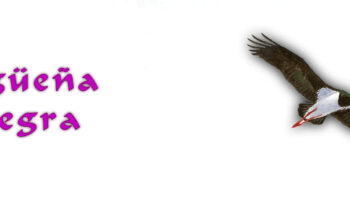 08.1-Cigüeña-Negra