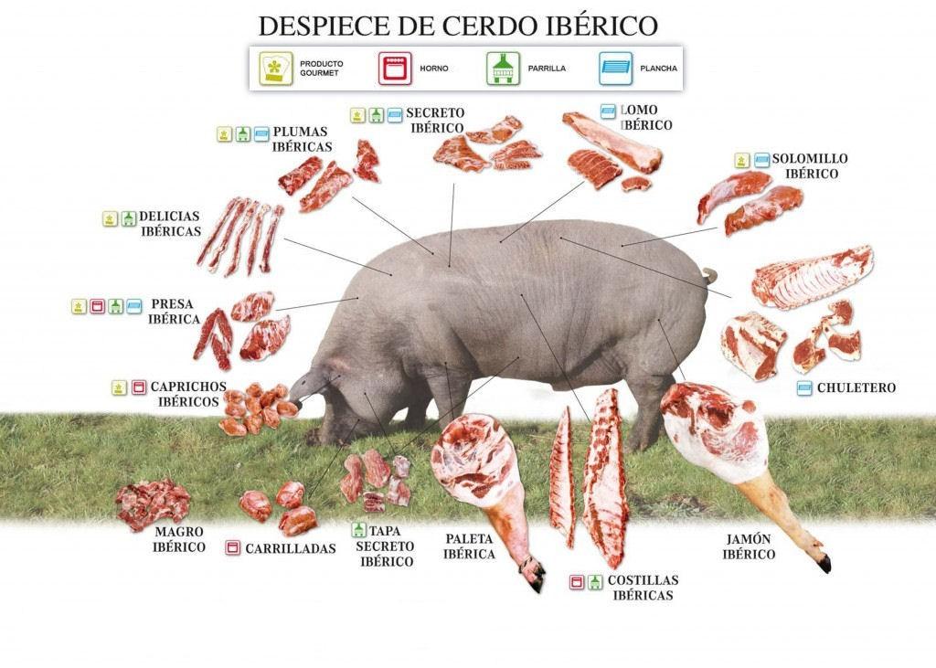 La imagen tiene un atributo ALT vacío; su nombre de archivo es Despiece-del-cerdo-iberico-1024x731-1.jpg